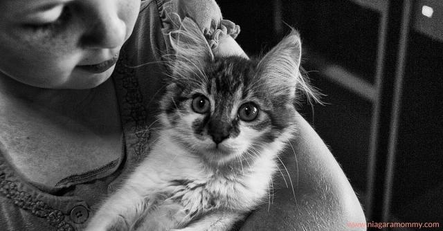 cat humane society
